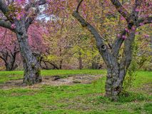 Central Park, New York City au printemps photographie stock