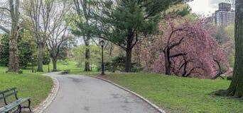 Central Park, New York City au printemps photos libres de droits