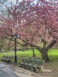Central Park, New York City au printemps image libre de droits