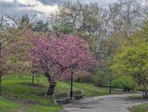 Central Park, New York City au printemps images stock