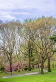 Central Park, New York City au printemps photos stock