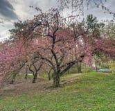 Central Park, New York City au printemps image stock