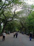 Central Park New York City Royalty Free Stock Photography