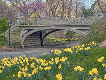 Central Park, New York City spring. Central Park, New York City  in early spring Royalty Free Stock Photos