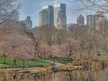 Central Park, New York City spring Royalty Free Stock Photography