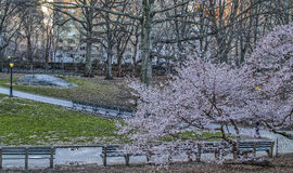 Central Park, New York City Royalty Free Stock Photo