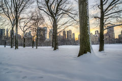 Central Park, New York City en hiver Image stock