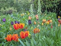 Central Park, New York City en primavera foto de archivo libre de regalías