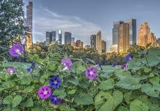 Central Park, New York City Royalty Free Stock Photos