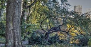 Central Park New York City höst Arkivbilder