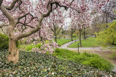 Central Park, New York City Stock Photos