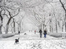 Central Park, New York City the mall  Febuary 5th 2016 Stock Photography