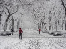 Central Park, New York City. Central Park Mall is a mall in Central Park, in Manhattan, New York City after snow storm on Febuary 5th 2016 Stock Photography