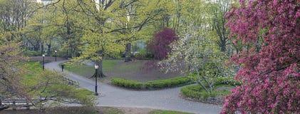Central Park, New York City Malus 'Purple Prince' Royalty Free Stock Photo
