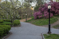 Central Park, New York City Malus 'Purple Prince' Stock Photography