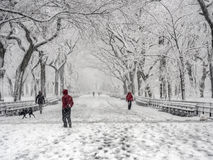 Central Park New York City, Manhattan during blizzard Royalty Free Stock Photography