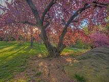 Central Park, New York City na mola fotografia de stock royalty free