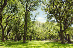 Central Park. New York City, NY, USA. Stock Photo