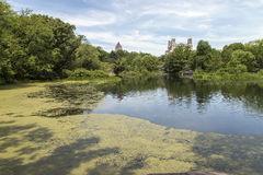 Central Park in New York City Royalty Free Stock Photo