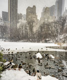 Central Park, New York City after sniw Royalty Free Stock Photo