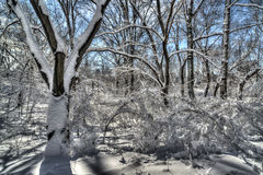 Central Park, New York City snow styorm Stock Photo