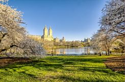 Central Park, New York City spring Royalty Free Stock Images