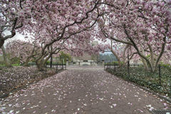 Free Central Park, New York City Spring Royalty Free Stock Photo - 36477905