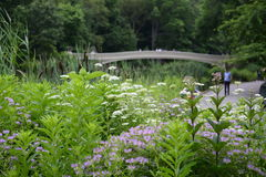 Central Park, New York City in Spring Stock Photo