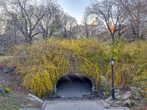 Central Park, New York City spring. Central Park, New York City  in early spring Stock Image