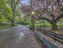 Central Park, New York City spring Royalty Free Stock Photo