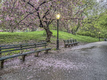 Central Park, New York City spring Stock Photo