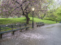 Central Park, New York City spring Royalty Free Stock Photos