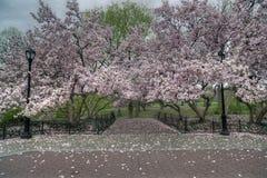 Central Park, New York City spring Stock Photo