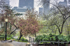 Central Park, New York City  during spring rain Stock Images