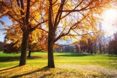Central park at sunny autumn day Royalty Free Stock Photo