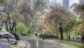Central Park New York City under vårregn Royaltyfri Foto