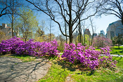Central Park, New York City. USA. Stock Photo