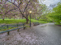 Central Park New York City vår Fotografering för Bildbyråer