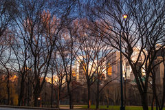 Central park new york Royalty Free Stock Photos