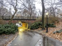 Central Park, New York City. In winter Royalty Free Stock Image