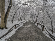 Central Park, New York City winter Stock Images