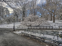Central Park, New York City winter Stock Image