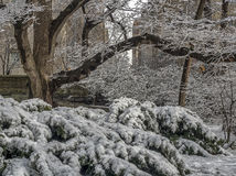 Central Park, New York City winter Stock Photo