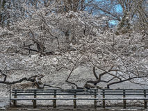 Central Park, New York City winter Royalty Free Stock Images