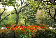 Central Park New York de jardin de Shakespeare de tulipes Photos libres de droits