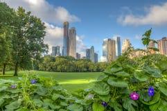 Central Park, New York, prato delle pecore fotografia stock libera da diritti