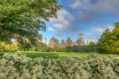 Central Park, New York, prato delle pecore fotografie stock