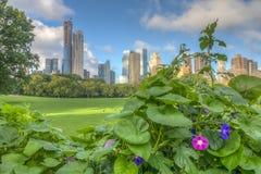 Central Park, New York, prato delle pecore fotografie stock libere da diritti