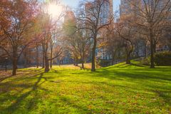 Central Park. New York. USA in autumn with beautiful fall trees royalty free stock photos