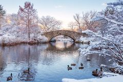 Central Park. New York. USA in winter covered with snow royalty free stock photography